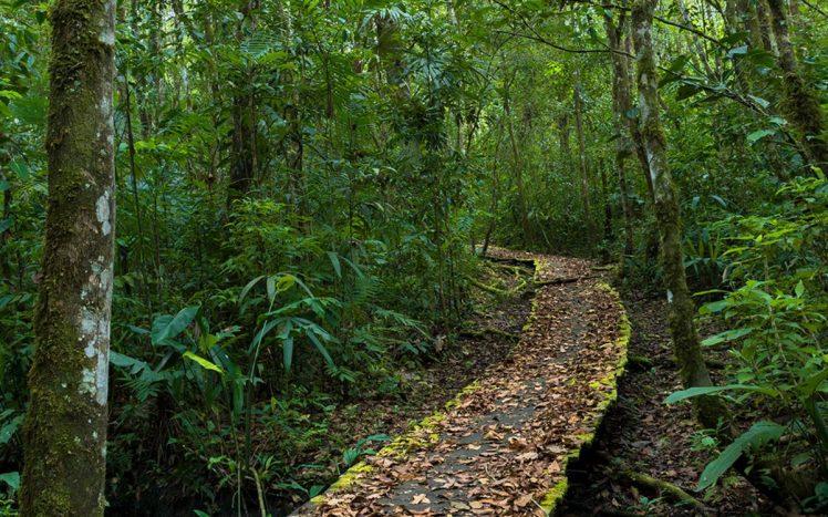 selva-lacandona
